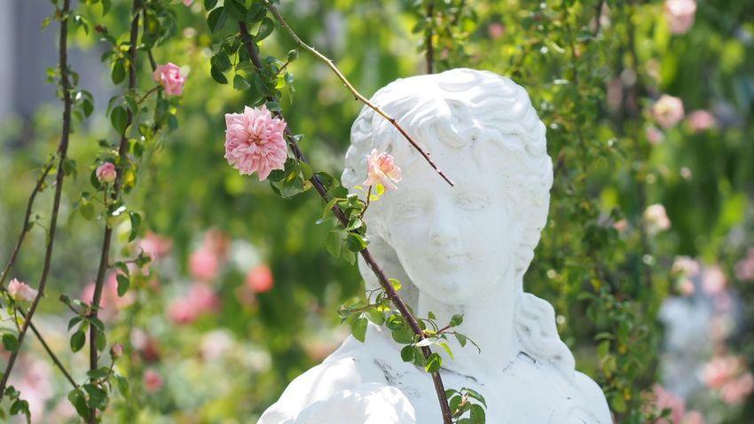 Rose Garden Roses Enjoying Life EyeEm Best Shots EyeEm Nature Lover Flower Photography Flowerlovers Beautiful Nature Spring Pink