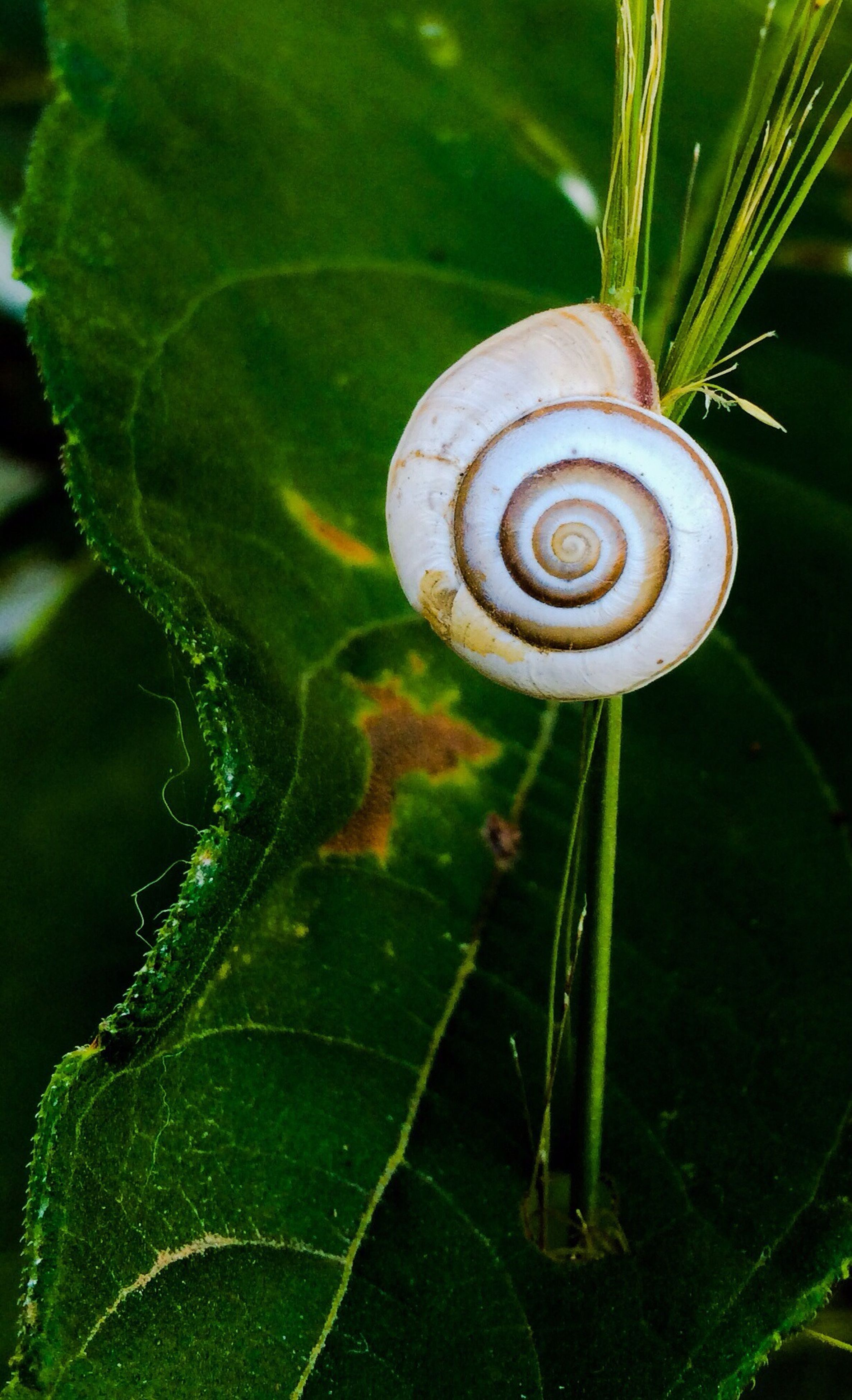 close-up, leaf, snail, growth, plant, green color, focus on foreground, spiral, nature, animal shell, beauty in nature, selective focus, outdoors, no people, fragility, high angle view, freshness, one animal, day, natural pattern