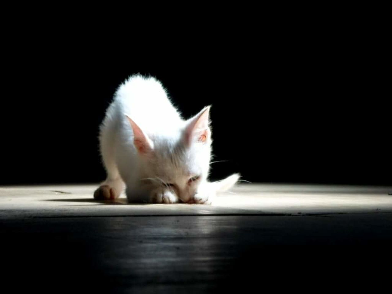 one animal, pets, looking, domestic cat, no people, black background, animal themes, indoors, day