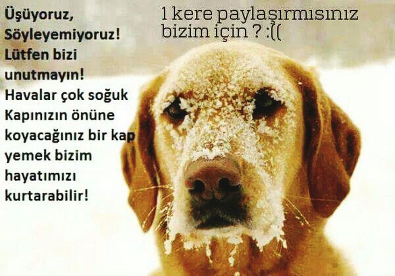 Sokaktahayatvar Hi! Taking Photos Winter Turkey ♡ Sokakhayvanlarinikoruyun