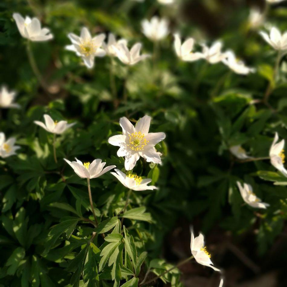 Der Frühling kommt Frühling Frühlingserwachen Spring Springtime Nature Naturpur Huawei P9 Plus Huawei P9 Leica Leica