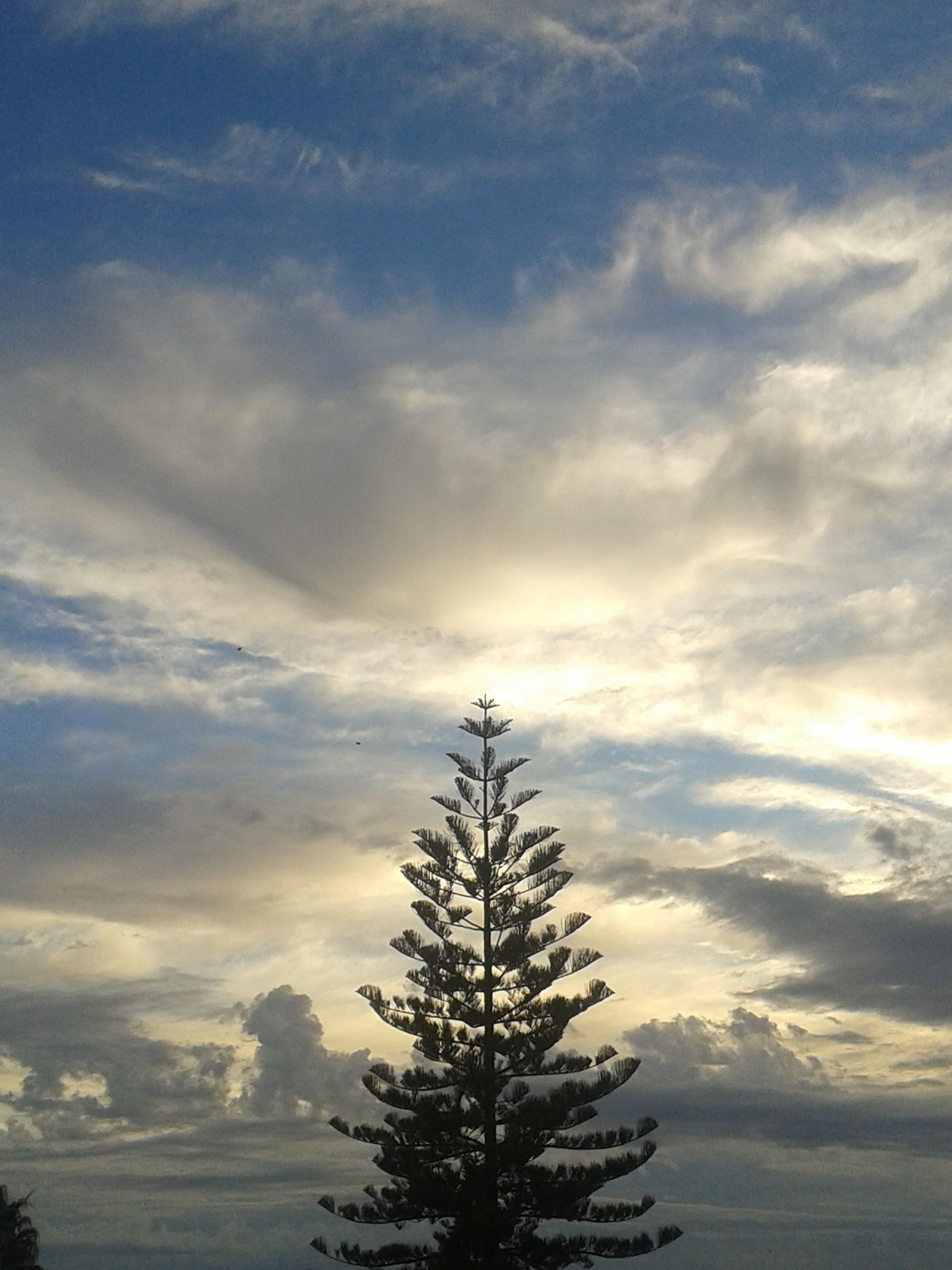sky, cloud - sky, tranquility, tranquil scene, scenics, beauty in nature, cloudy, nature, cloud, low angle view, tree, idyllic, outdoors, silhouette, no people, day, weather, growth, cloudscape, blue