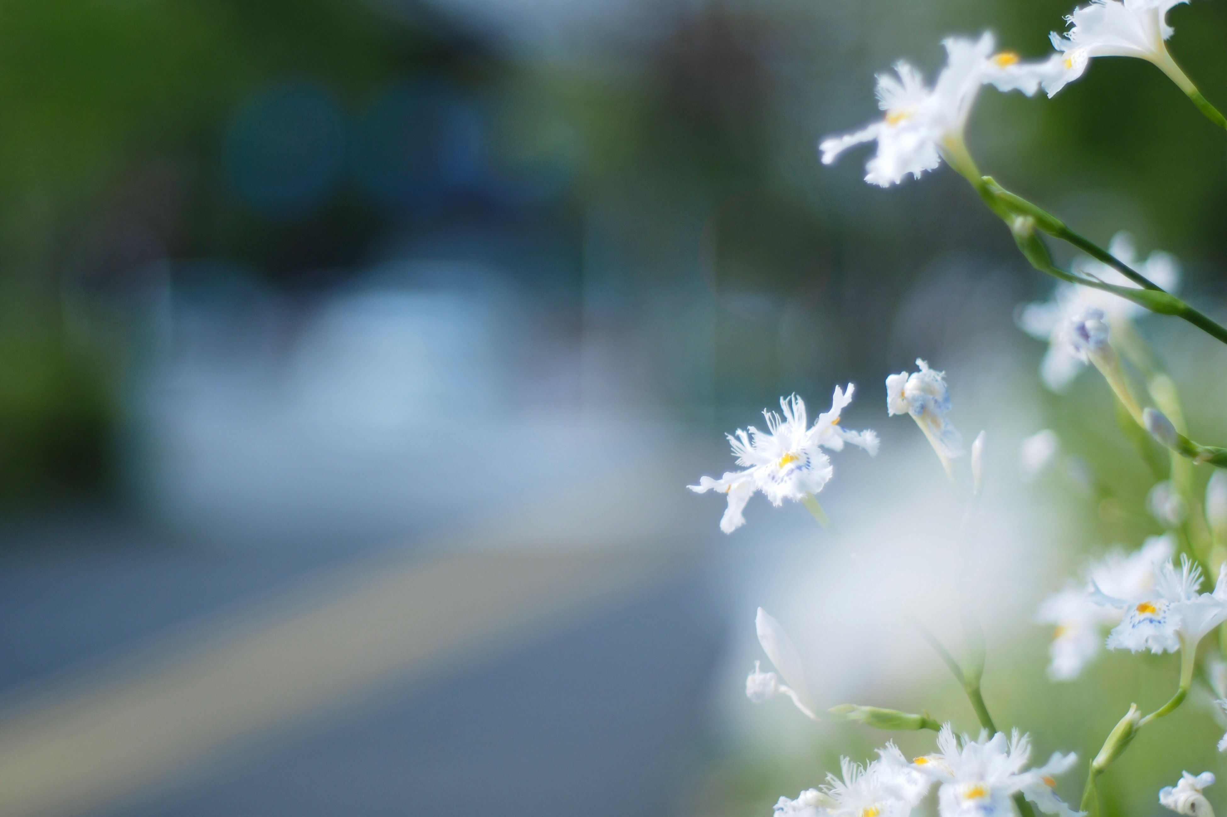 flower, nature, growth, fragility, freshness, white color, beauty in nature, petal, close-up, no people, flower head, outdoors, day, plant, blooming