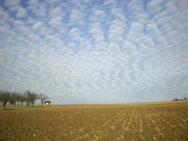 Agriculture Beauty In Nature Cloud Cloud - Sky Cloudy Crop  Cultivated Land Day Field Growth Horizon Over Land Idyllic Landscape Nature No People Non-urban Scene Outdoors Overcast Remote Rural Scene Scenics Sky Tranquil Scene Tranquility Tree