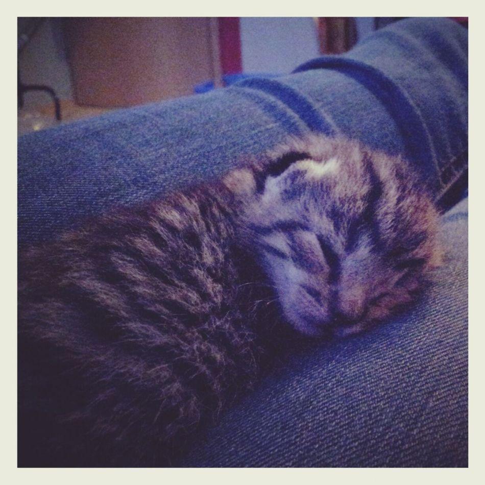 I Love this cat. ♡