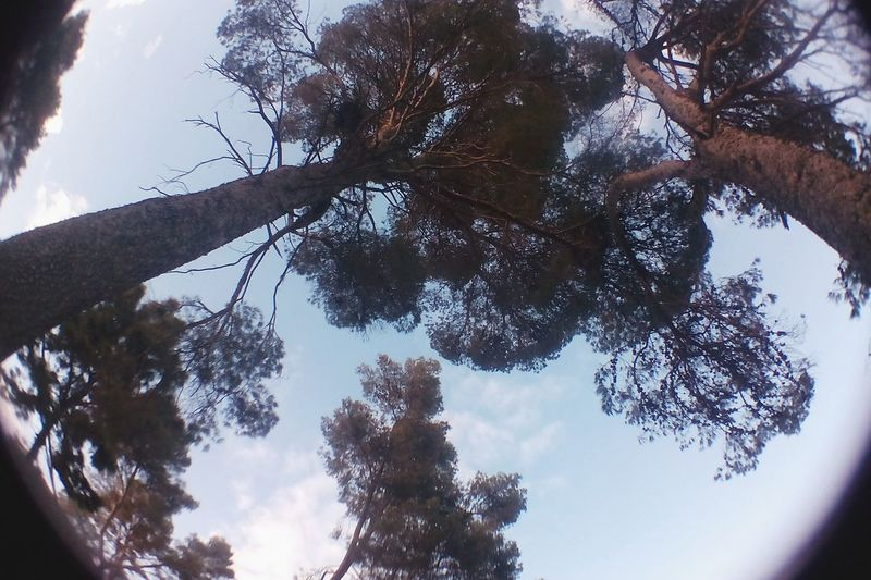 Camping Pinos Campo Arboles Trees Sky Contrast Eyefish Dark