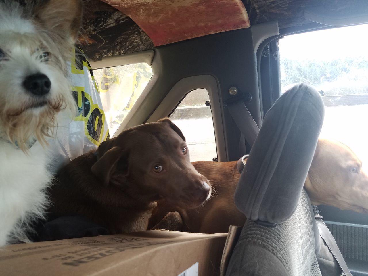 vehicle interior, car interior, dog, car, pets, transportation, mammal, domestic animals, vehicle seat, animal themes, sitting, mode of transport, land vehicle, day, one animal, portrait, no people, close-up