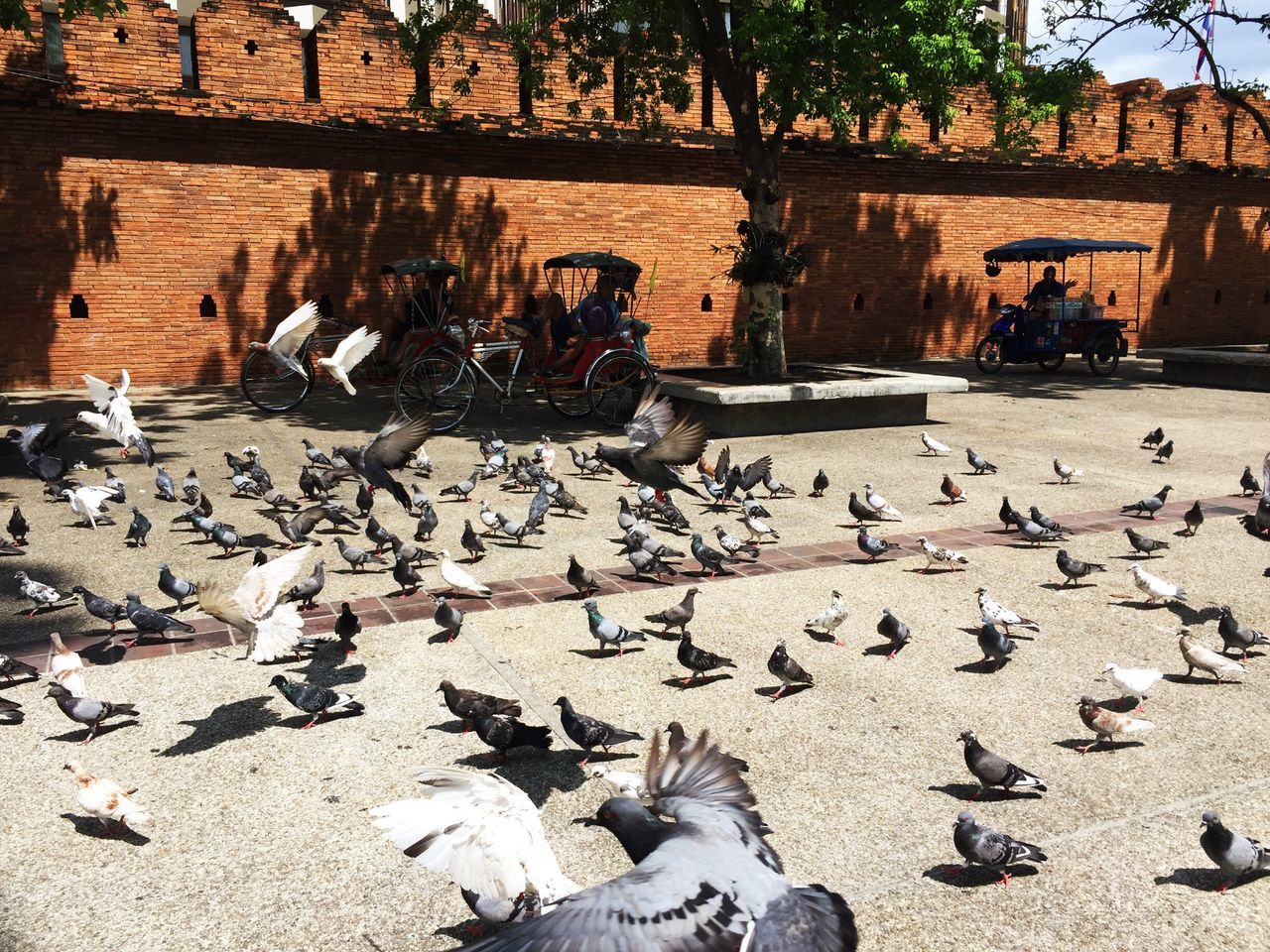 large group of animals, bird, animals in the wild, flock of birds, animal themes, large group of people, day, animal wildlife, outdoors, sunlight, architecture, nature, people