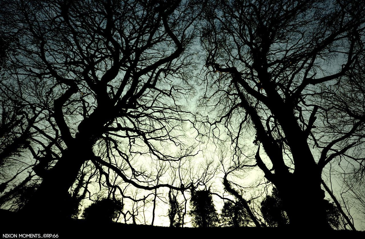silhouette, tree, nature, beauty in nature, tranquility, low angle view, bare tree, branch, tranquil scene, scenics, outdoors, no people, day, sky