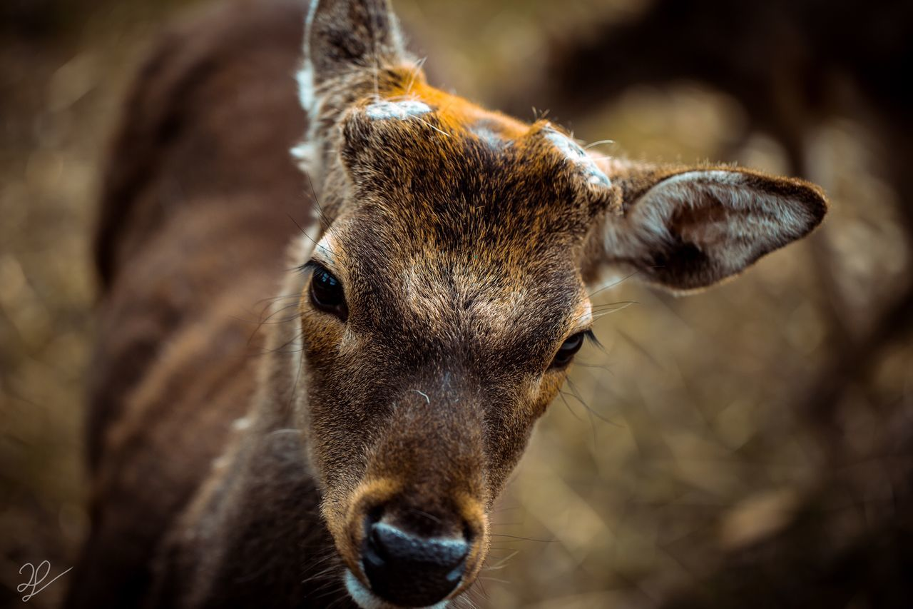 One Animal Animal Themes Focus On Foreground Close-up Mammal Animals In The Wild No People Animal Head  Looking At Camera Portrait Day Animal Wildlife Outdoors Nature