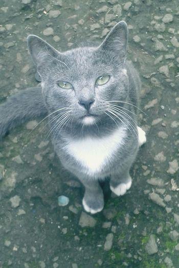 Cat♥ EyeEmNewHere