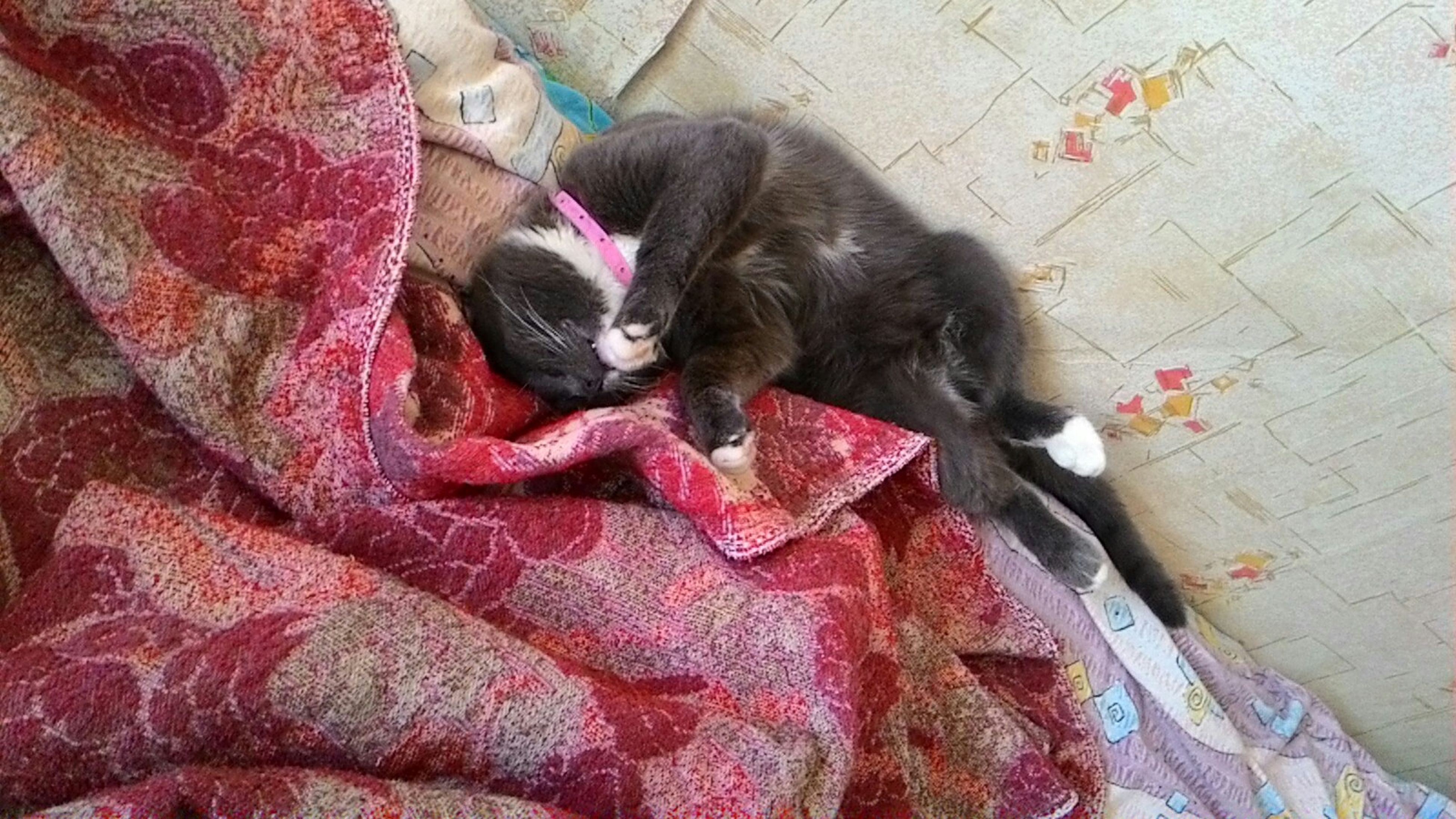 domestic animals, pets, domestic cat, cat, indoors, animal themes, mammal, one animal, high angle view, feline, relaxation, resting, sleeping, lying down, bed, no people, red, whisker, blanket, comfortable
