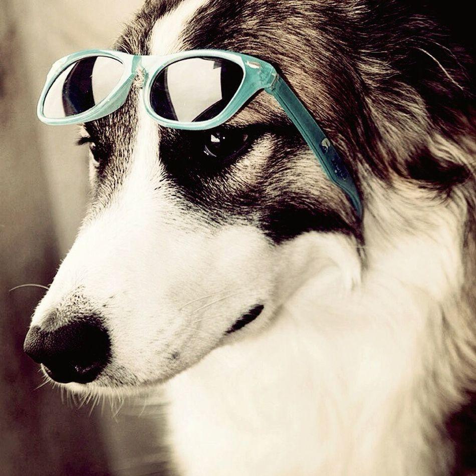 Bordercollie  Border Collie Dogs Dog Perro Perros  Ilovemydog I Love My Dog Perromolon