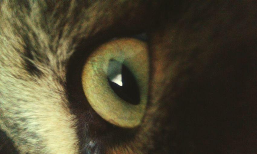 Кошачий глаз глазик