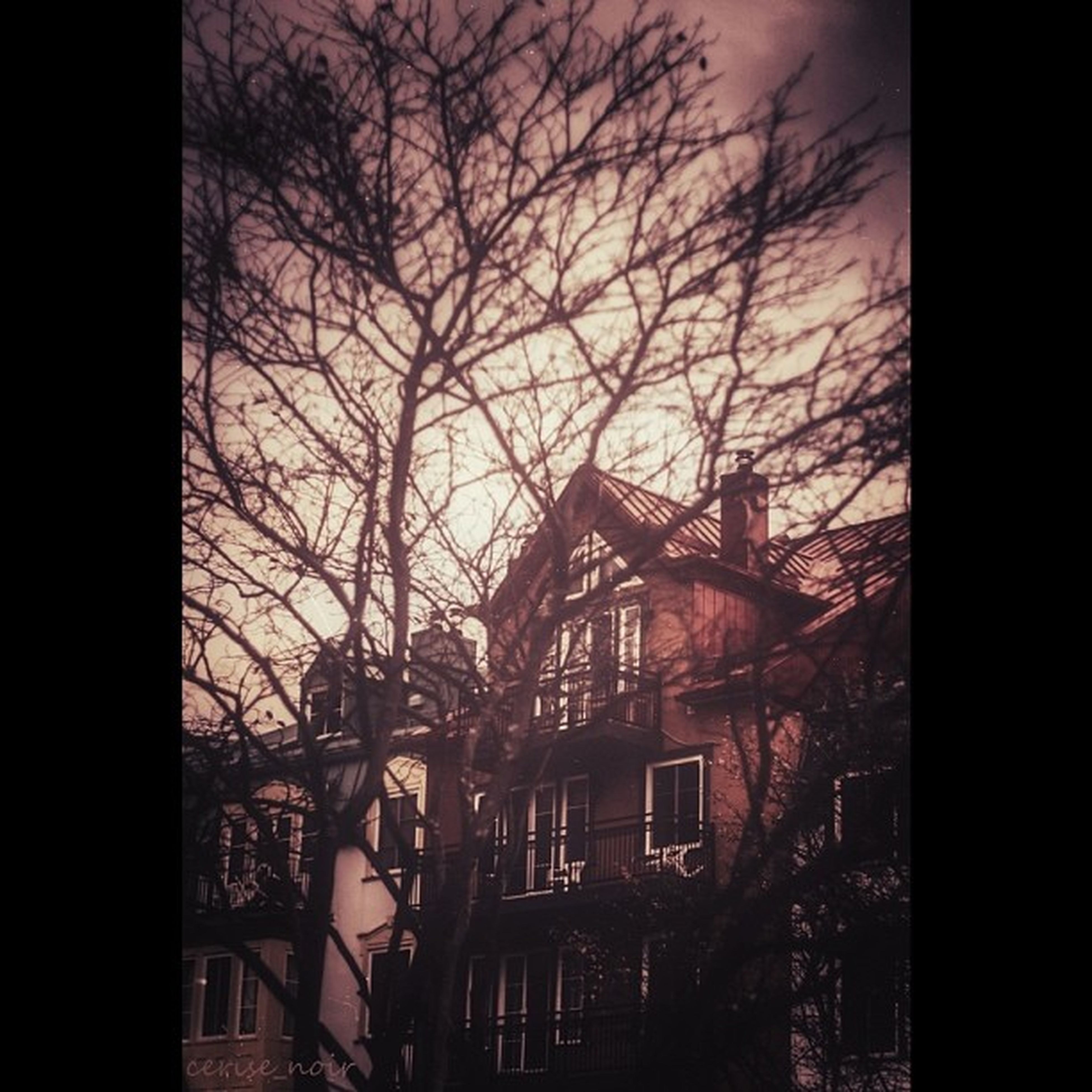 building exterior, architecture, built structure, bare tree, tree, branch, residential structure, residential building, city, house, sky, auto post production filter, window, building, residential district, transfer print, dusk, outdoors, silhouette, no people