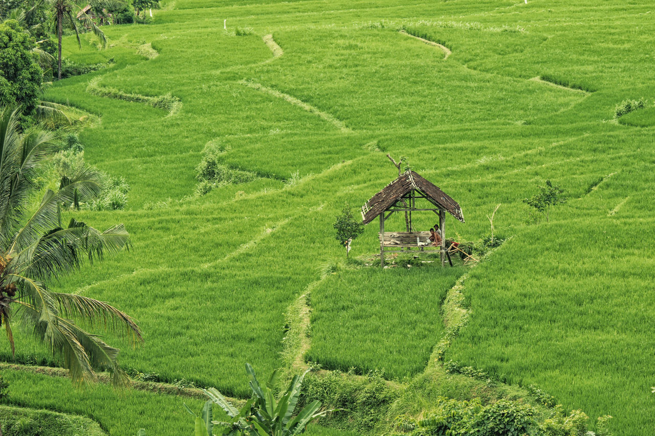 Green is Better than gold #green #greenpeace #Indonesia #lombok Agriculture Beauty In Nature Day Environment Farm Field Grass Green Color Growth Landscape Nature No People Outdoors Rice Paddy Rural Scene