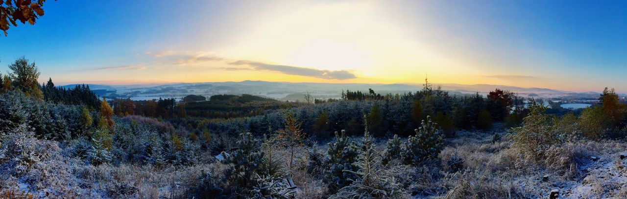 nature, tranquility, sunset, tranquil scene, sky, beauty in nature, tree, no people, scenics, growth, outdoors, landscape, winter, mountain, cold temperature, day