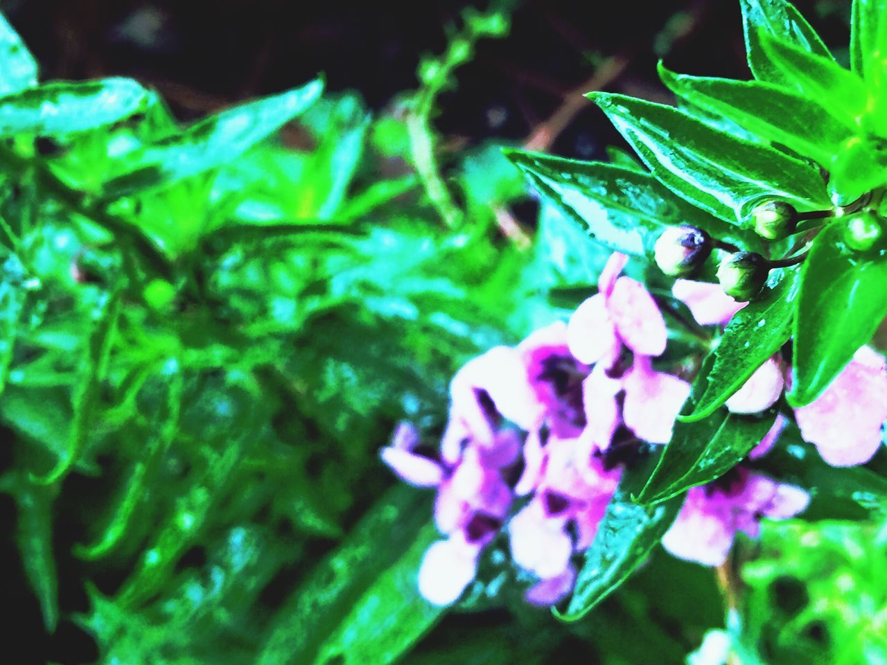 Nature Freshness Plant Leaf Growth Beauty In Nature Outdoors No People