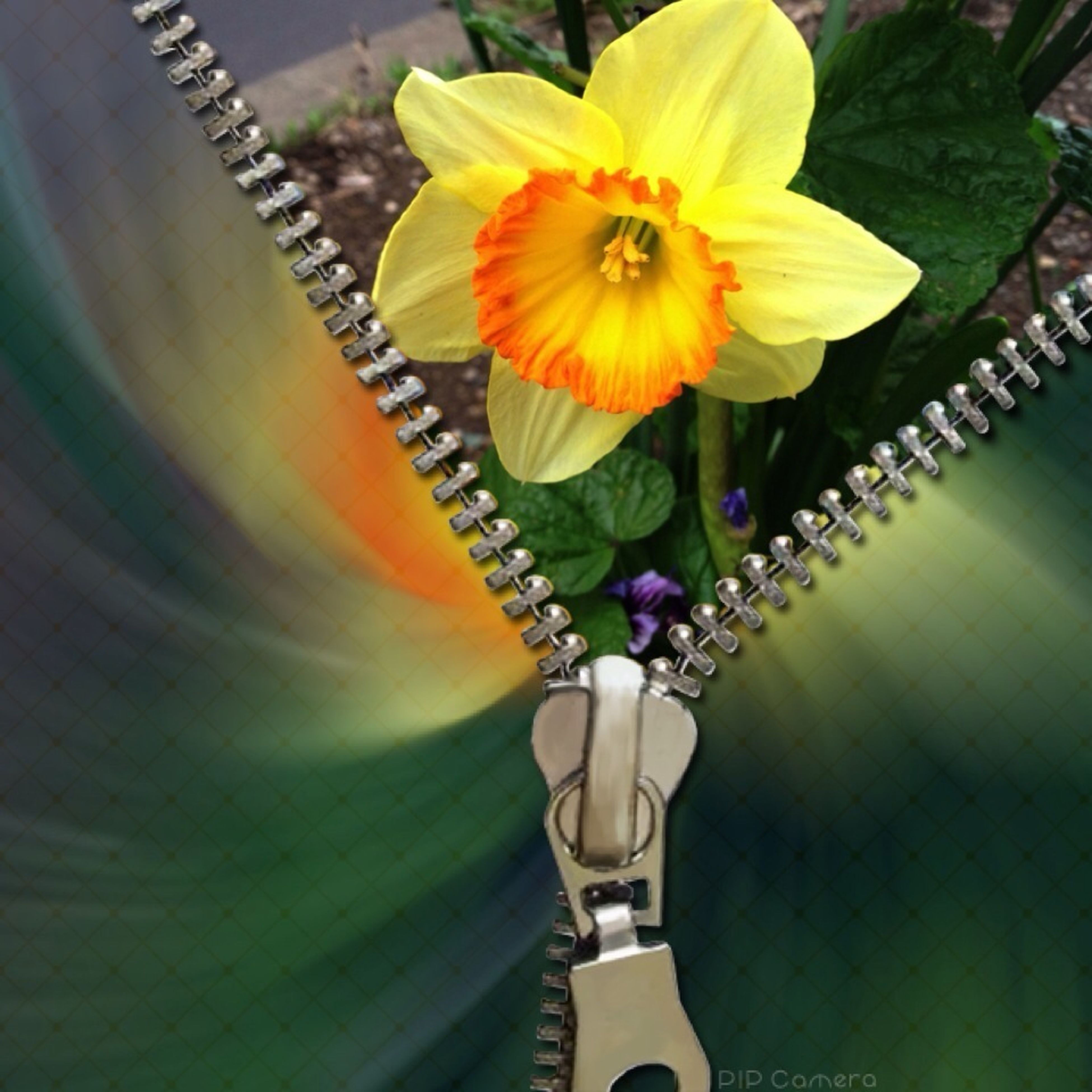 flower, indoors, fragility, decoration, petal, hanging, yellow, close-up, flower head, freshness, vase, multi colored, no people, lighting equipment, focus on foreground, home interior, nature, high angle view, decor, variation