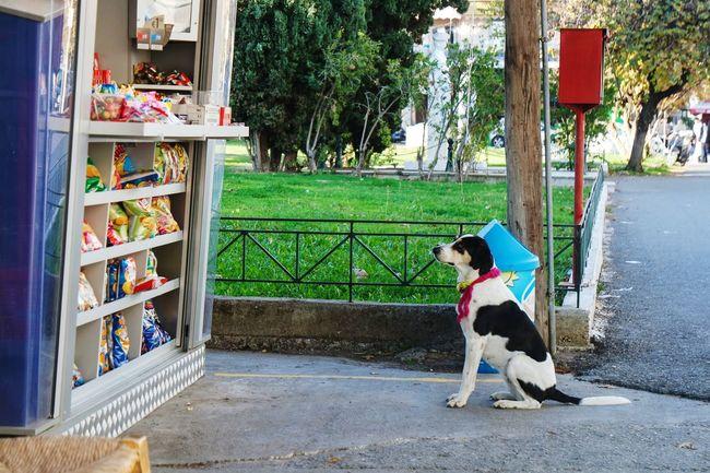 Just waiting... In Greece Taking Photos Streetphotography EyeEm Best Shots Eye4photography  Open Edit Fresh 3 Showcase: January Street Photography Dog Dogslife