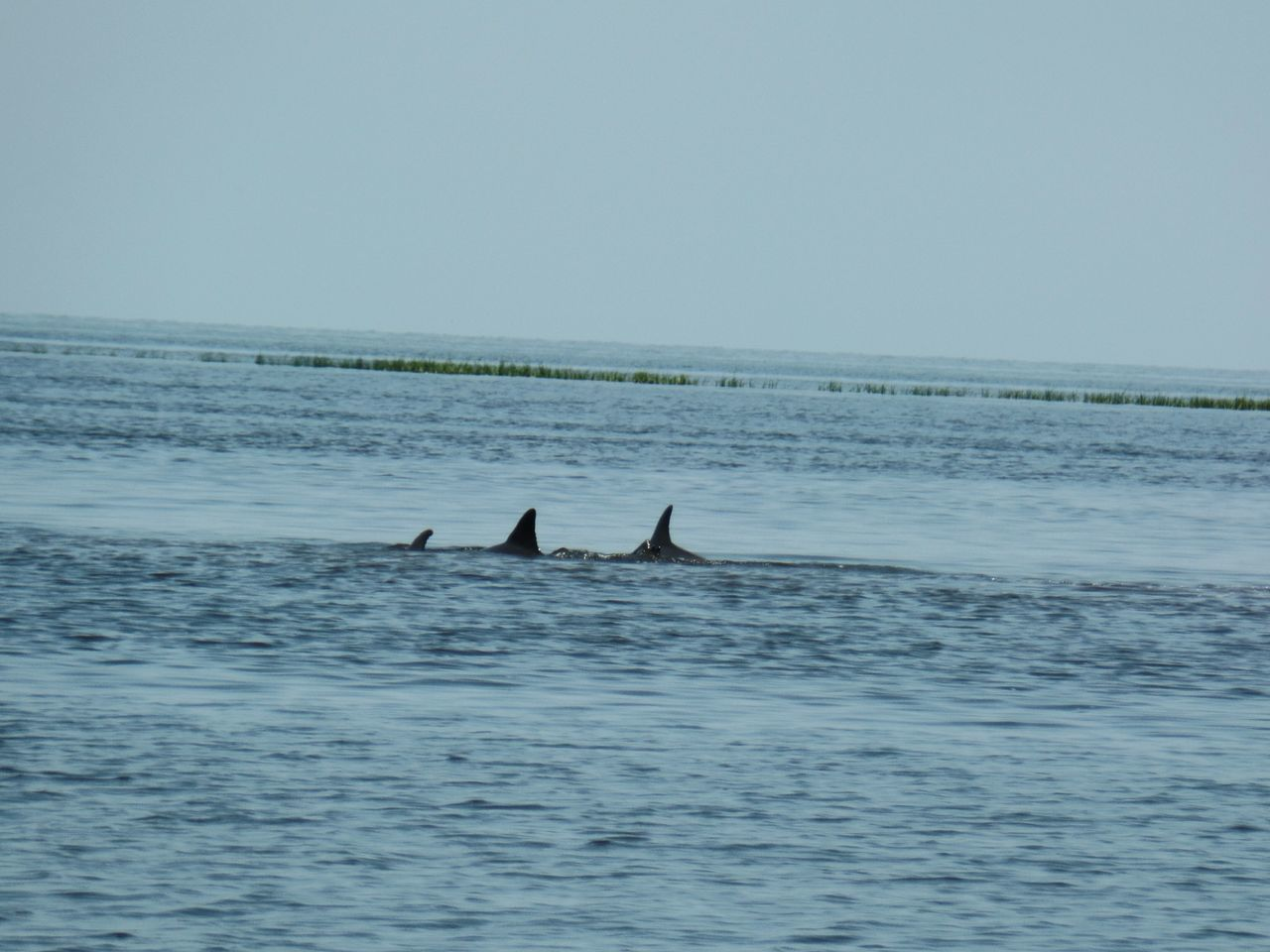 Landscape_lovers Naturelovers Mothers Day Nature Photography Florida Beaches Dolphins Swimming Dolphinlover Dolphins Playing Florida Skies Check This Out Oceanview Spring2016Checkthis Out Naturephotography Yankeetown Florida Beaitiful View Naturelovers Natural Beauty Awesome Floridaliving