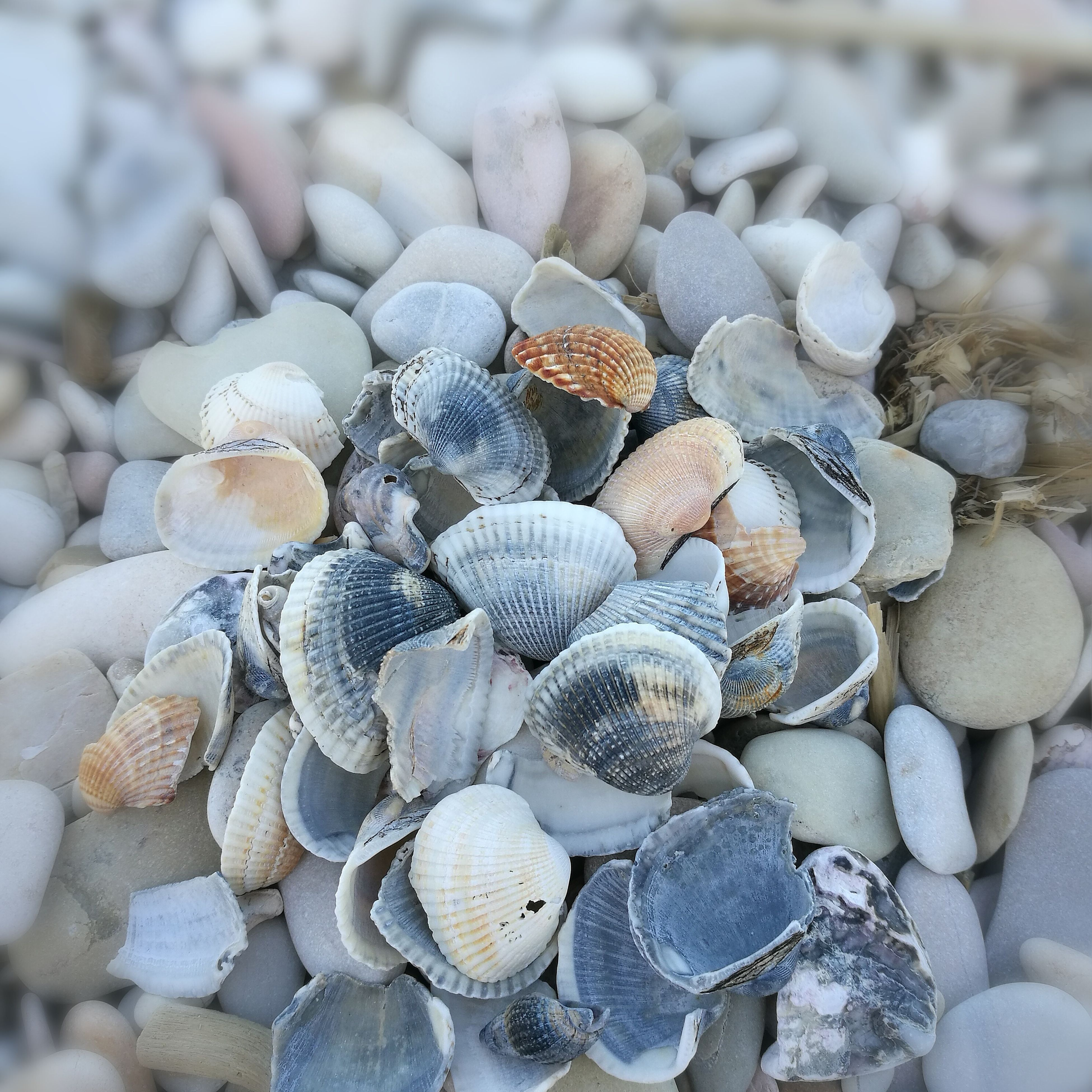 seashell, animal shell, clam, pebble, beach, nature, large group of objects, day, no people, abundance, outdoors, beauty in nature, full frame, backgrounds, pebble beach, close-up