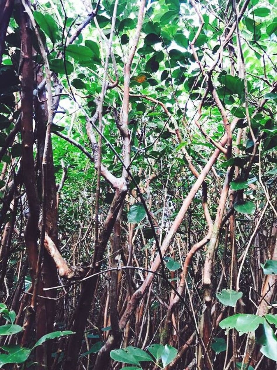The Secret Spaces Tree Forest No People Beauty In Nature Tranquility Nature Mauritius Island