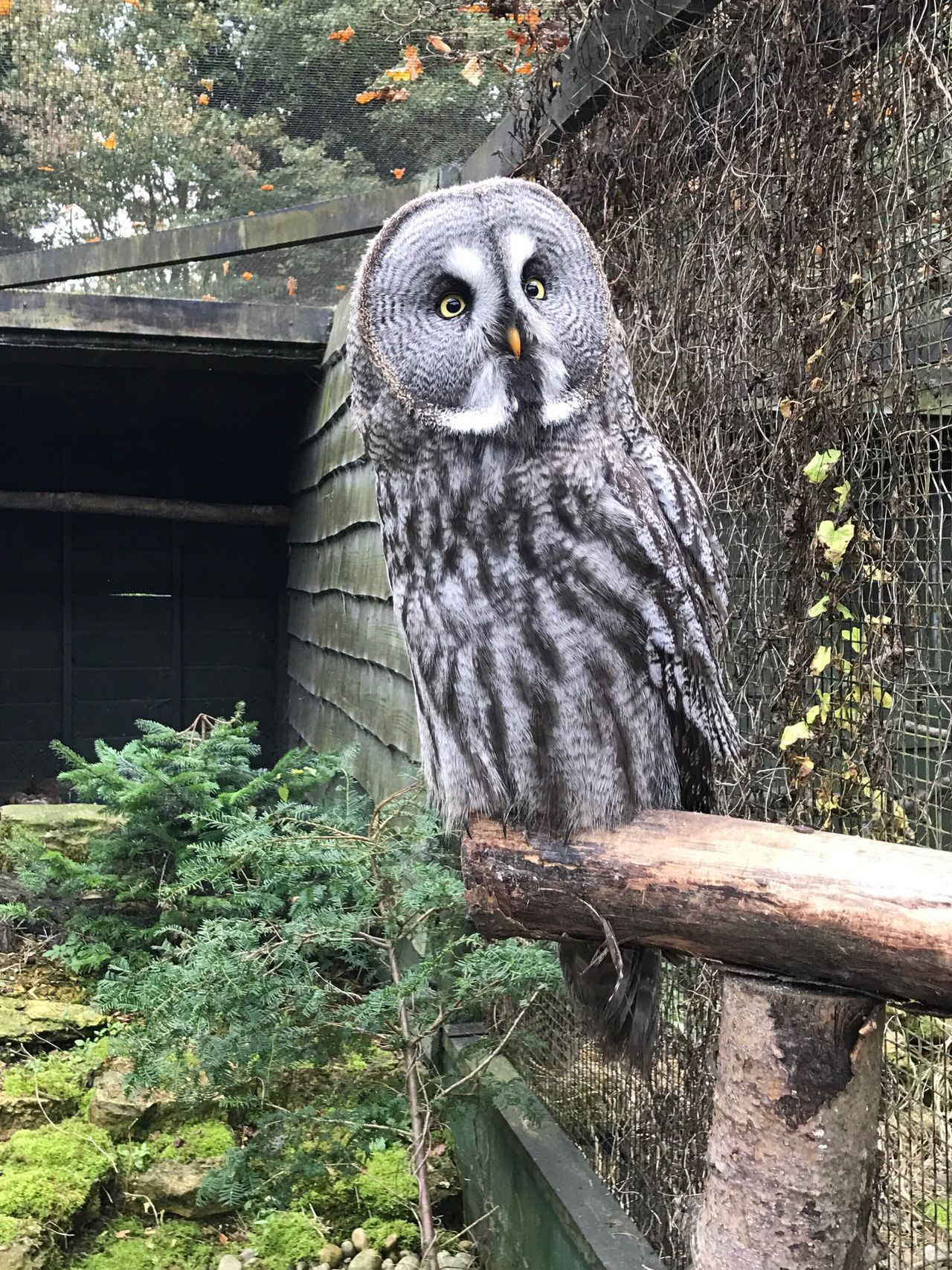 Beautiful stock photos of eule,  Aberford,  Animal Wildlife,  Animals In The Wild,  Bird