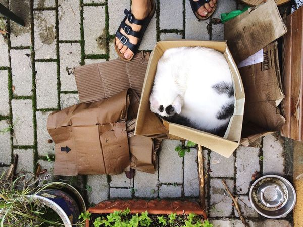 Messy backyard with cat and feet Domestic Animals One Animal Pets Mammal Low Section Real People Day Human Leg One Person Cardboard Box Outdoors Standing Domestic Cat White Cat High Angle View Feet