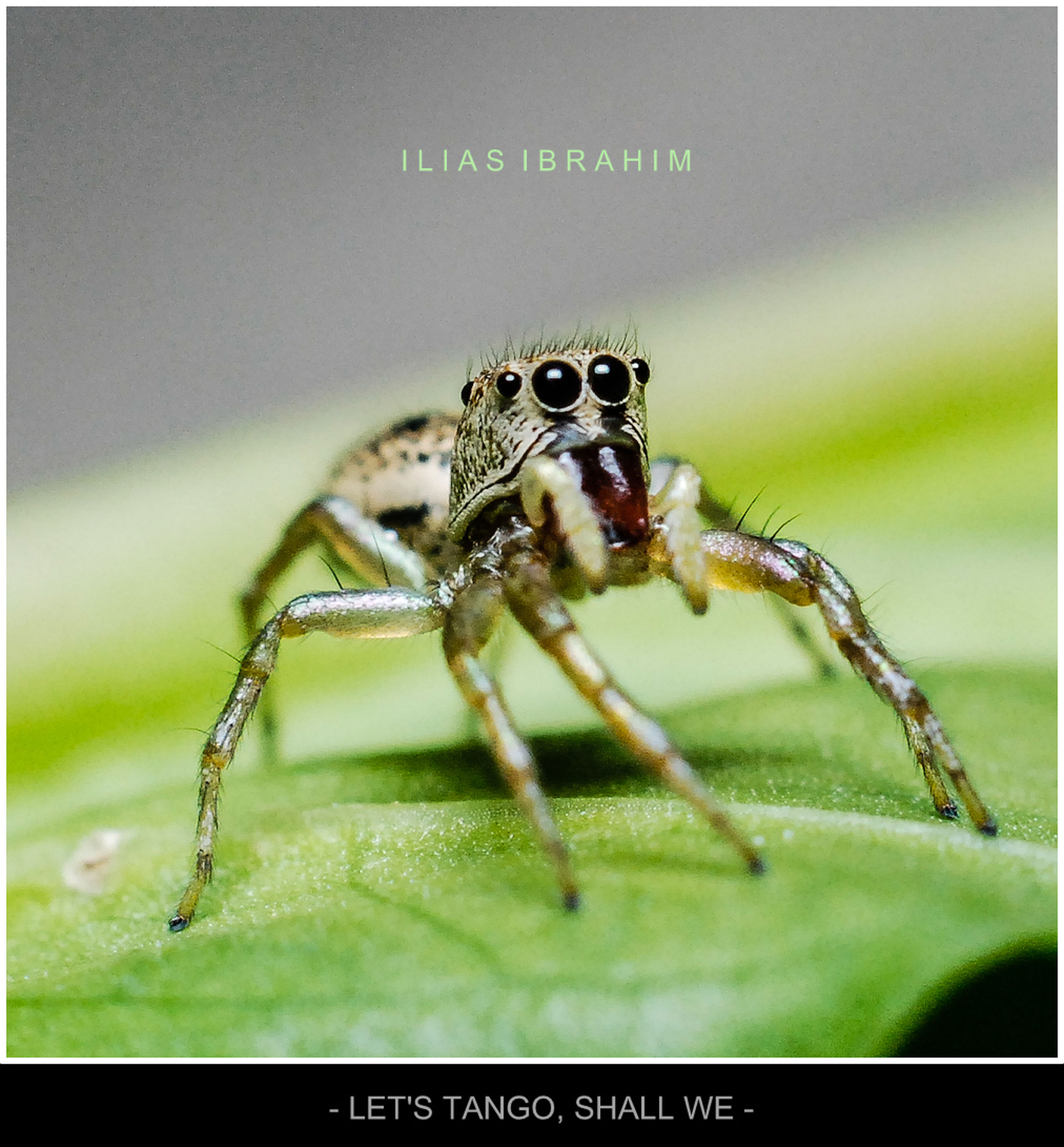 animal themes, one animal, animals in the wild, insect, wildlife, focus on foreground, close-up, green color, selective focus, spider, transfer print, nature, day, zoology, full length, no people, outdoors, dragonfly, auto post production filter