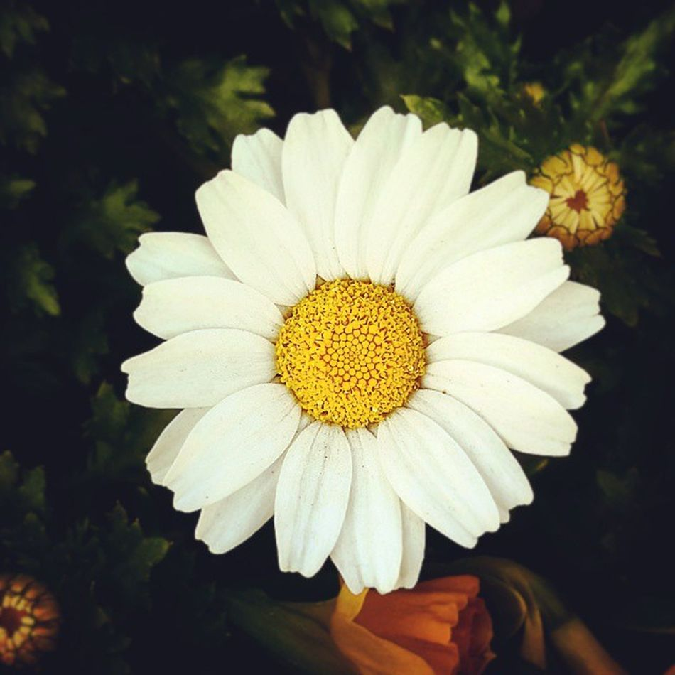 꽃 길거리에 꽃 꽃 경복궁 봄 청계천 서울 햇살좋은날 봄바람 들꽃 Flower Day Daily Instagood Tagsforlikes Follow 맞팔 일상 하루일과 하루