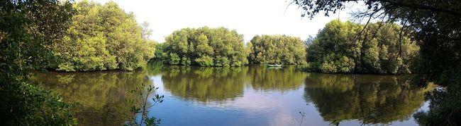 Nature Mangrove Park Reflection Lake