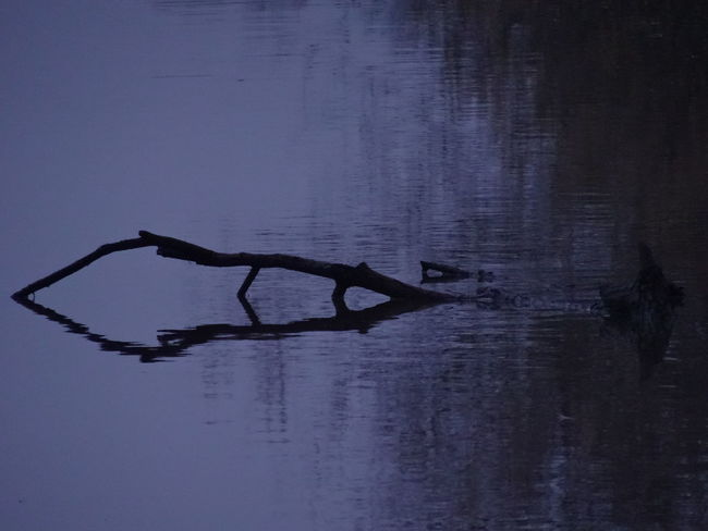 No People River Reflection Low Temperature Low Light Evening Wood Branch Silhouette Nature Dim Light Beauty In Nature