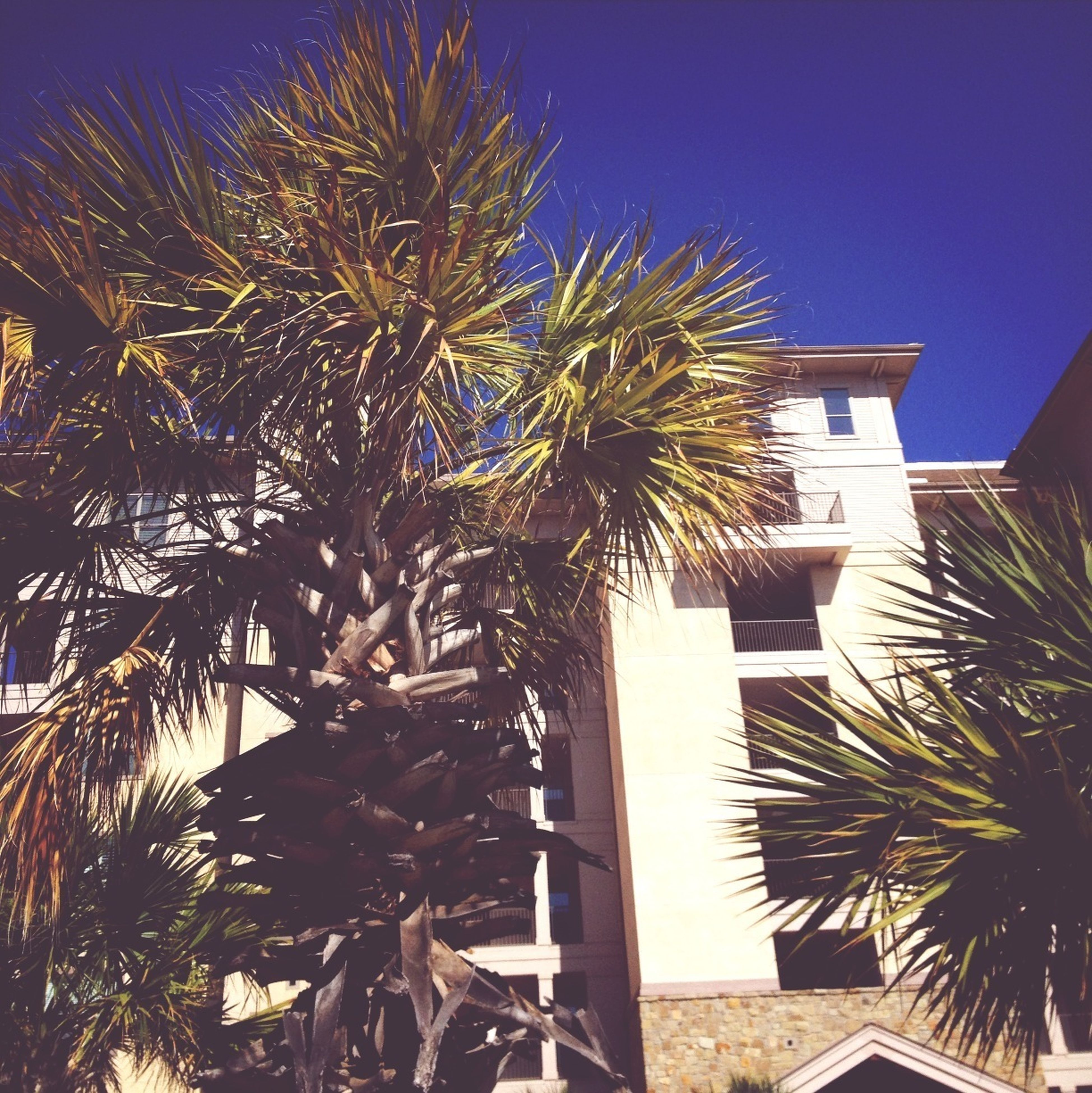 building exterior, palm tree, architecture, built structure, low angle view, tree, clear sky, growth, blue, tall - high, tree trunk, sunlight, building, city, house, sky, residential building, outdoors, branch, no people