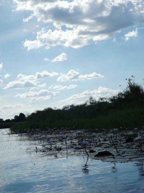 Africa Botswana Okavango Delta Okavango River Water River Riverview Nature Beauty In Nature No People Outdoors Landscape Day Waterlilies