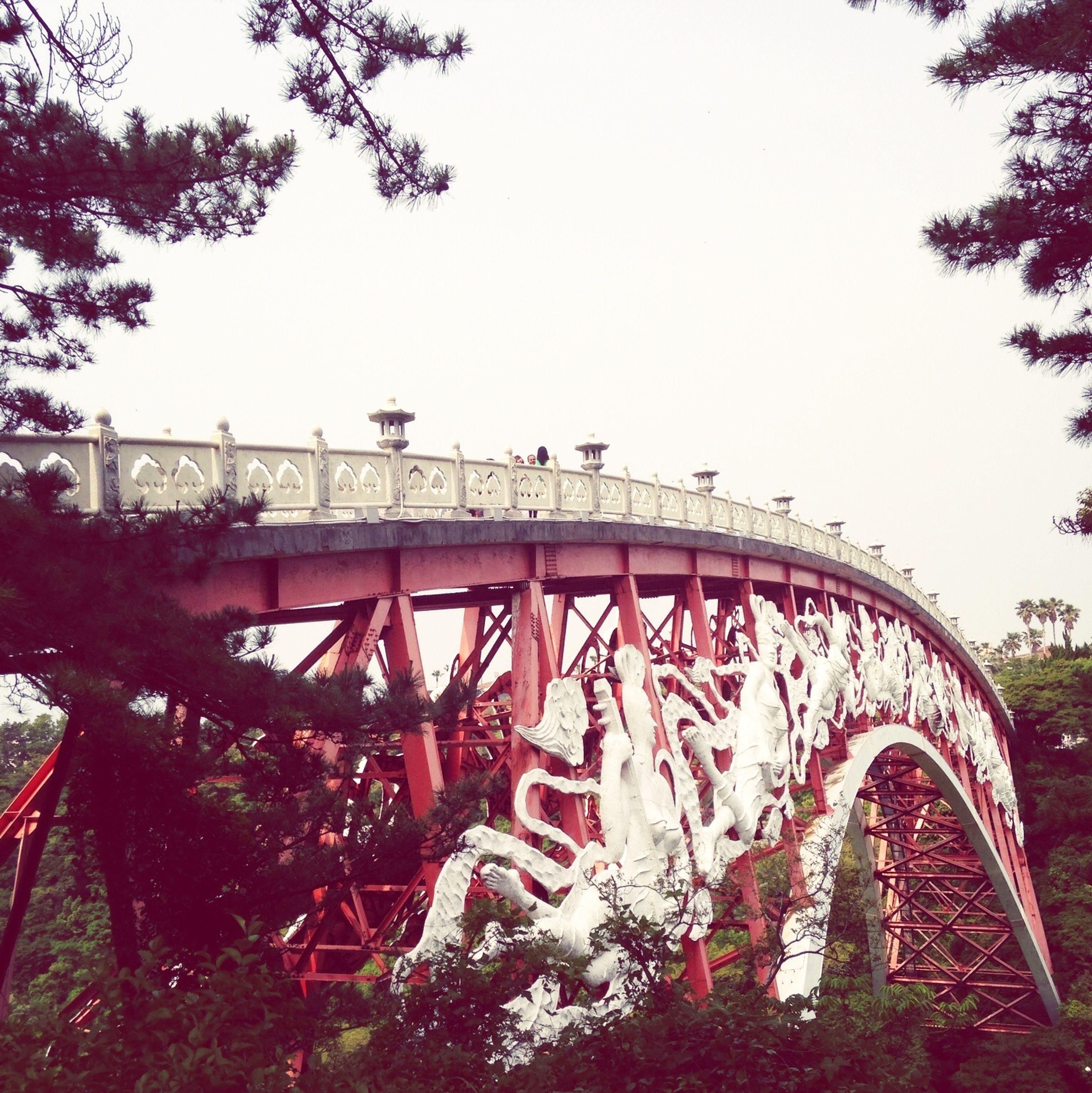 Bridge Jeju Honeymooners