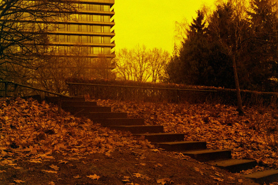 Fallen leaves lay besides the stairway in a park in Apeldoorn, the Netherlands. Film info: Lomography Redscale XR processed with Digibase C-41 ready to use kit at 37.8 °C. 35mm Film Analogue Photography Believeinfilm BIFscale17 Building Fallen Fallen Leaves Film Filmisnotdead Ground Istillshootfilm Leaves Lomography Nature Nature Park Path Redscale Sky Stairs Stairways Tree Urban Walking Path