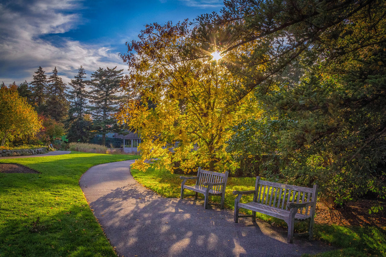 Nice day for a walk in the park. Benches Cloudy Grass Outdoors Park S Sun And Clouds Sun Through Trees Sunny Sunny Day Trees Trees And Sky Wooden Bench
