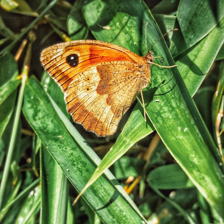 Nature On Your Doorstep EyeEm Nature Lover Taking Photos Butterfly Butterflyporn Nature Bamboo Nature Wildlife Close-up EyeEmNewHere EyeEmNewHere The Great Outdoors - 2017 EyeEm Awards