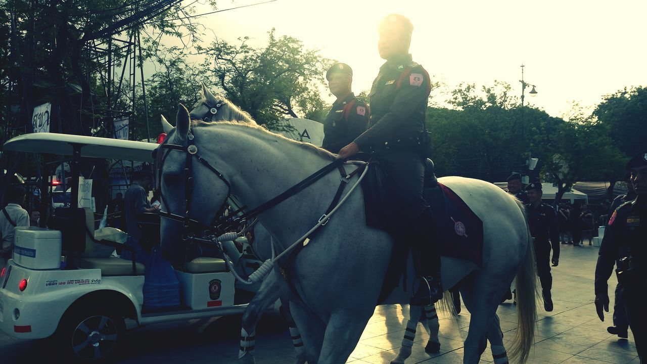 Horse Outdoors Thailand Police Horses