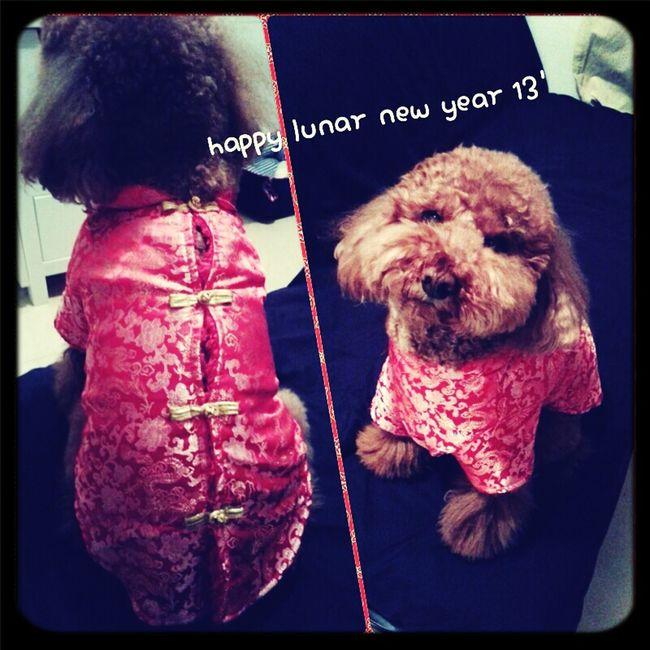 Bb: Happy Lunar New Year
