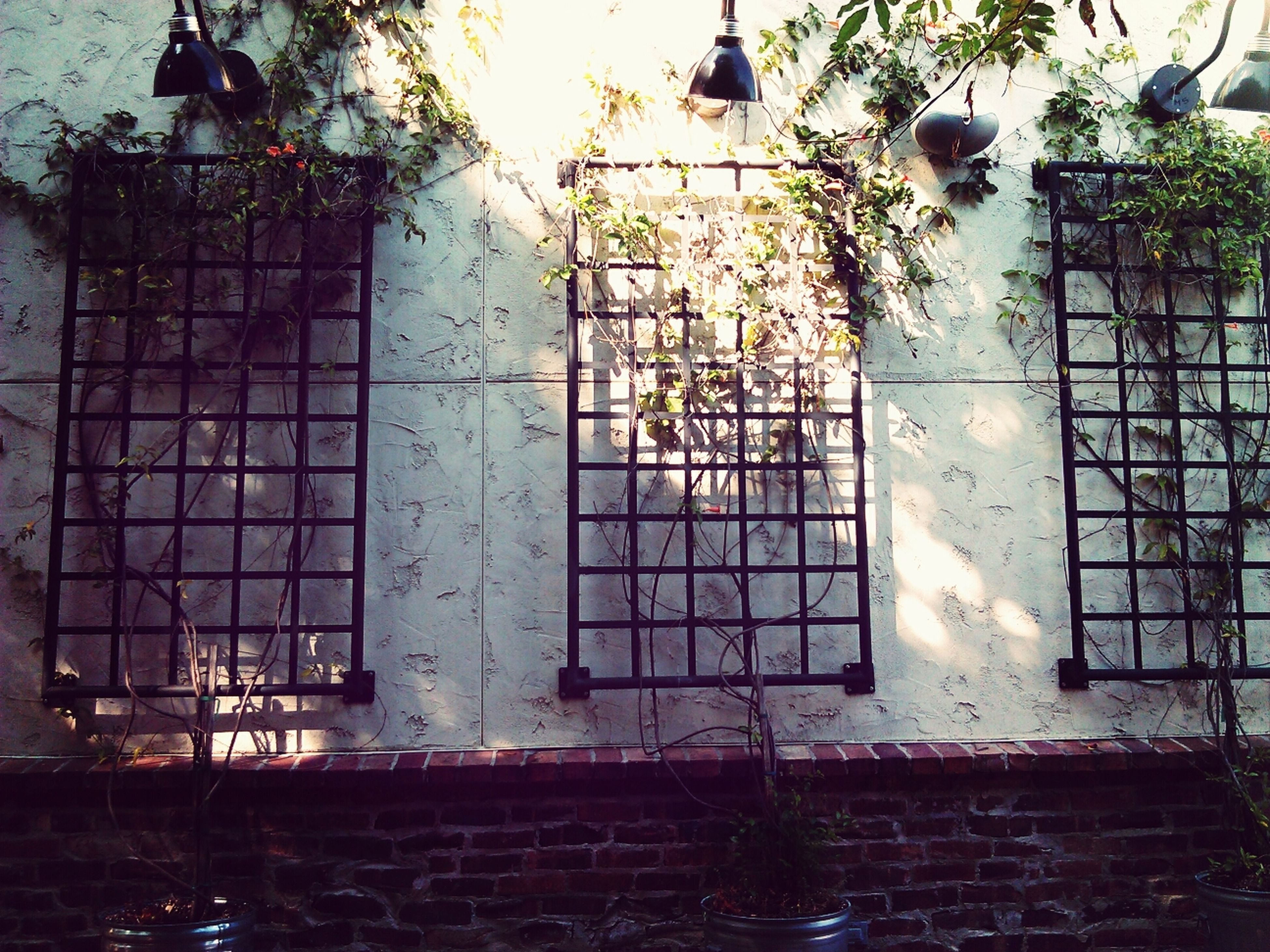architecture, built structure, building exterior, window, wall - building feature, glass - material, indoors, house, door, building, metal, closed, metal grate, potted plant, old, day, entrance, plant, no people, sunlight