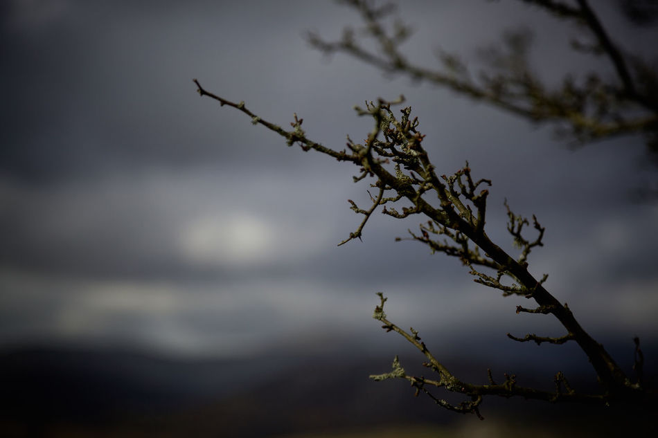 Beauty In Nature Botany Branch Close-up Cloud Cloud - Sky Day Focus On Foreground Growth Nature No People Outdoors Plant Scenics Selective Focus Sky Stem Tranquil Scene Tranquility Tree Twig Vignette Weather
