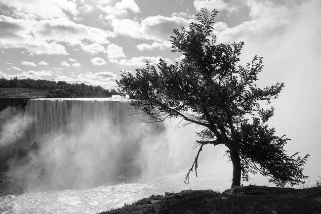 black tree & some white Blackandwhite Cloudy Growth Nature Niagara Falls Non-urban Scene Tranquil Scene Tranquility Tree Waterfall