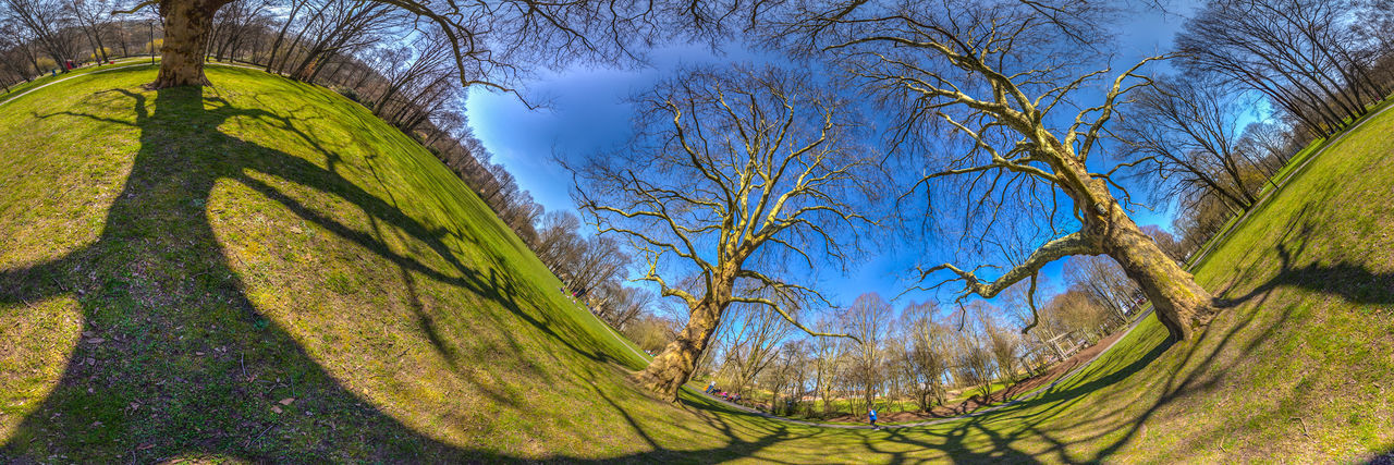 tree, bare tree, branch, nature, no people, day, beauty in nature, tree trunk, green color, outdoors, tranquil scene, sky, growth, scenics, tranquility, low angle view, landscape, grass