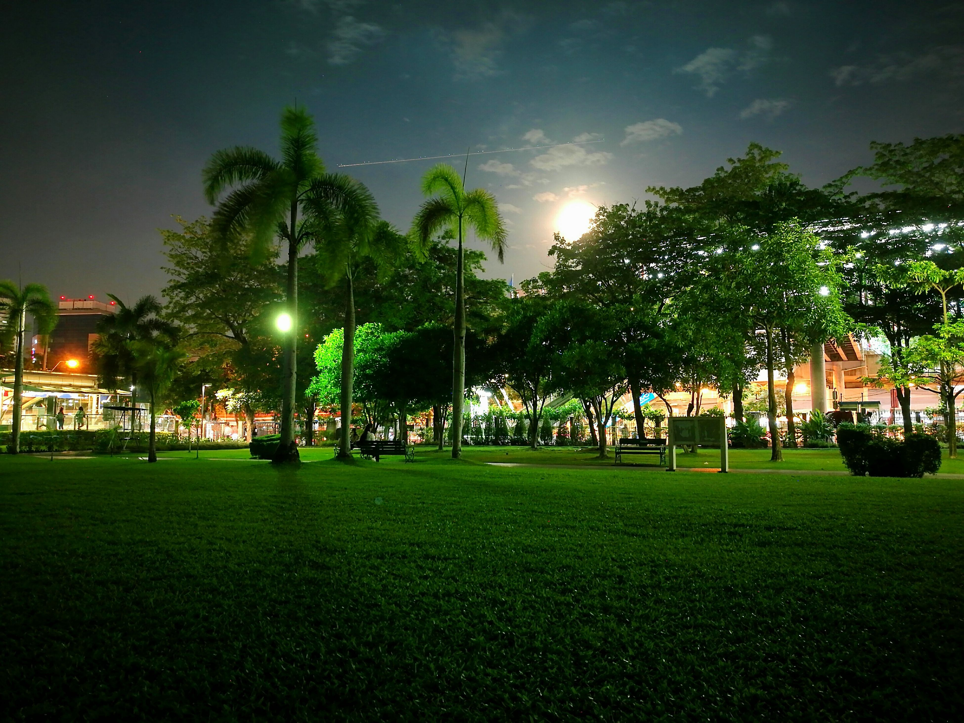 grass, palm tree, tree, tranquil scene, illuminated, tranquility, mid distance, night, tree trunk, solitude, green color, lighting equipment, sky, green, park - man made space, calm, scenics, tall, growth, nature, surface level, outdoors, sun, beauty in nature, footpath, countryside, park, lens flare, no people
