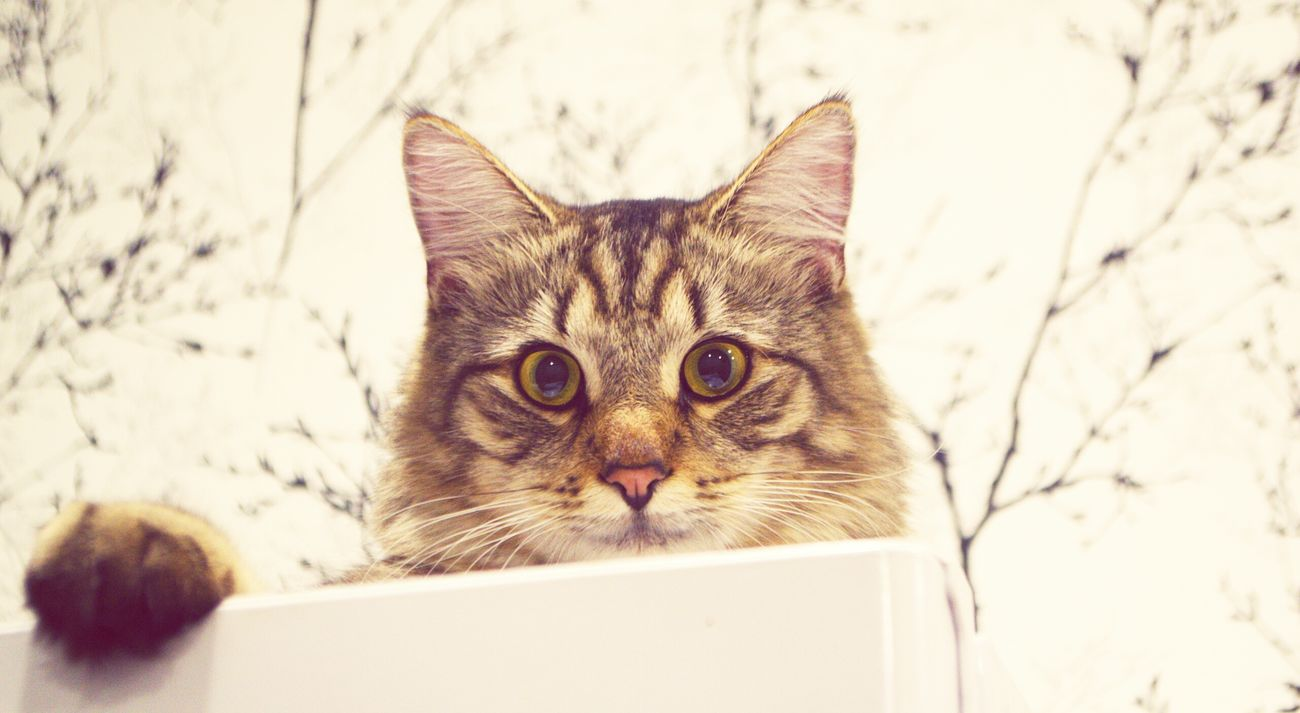 Meow Animals Pet Cat Lovers Cat Mortimer Meow photobyForbik©