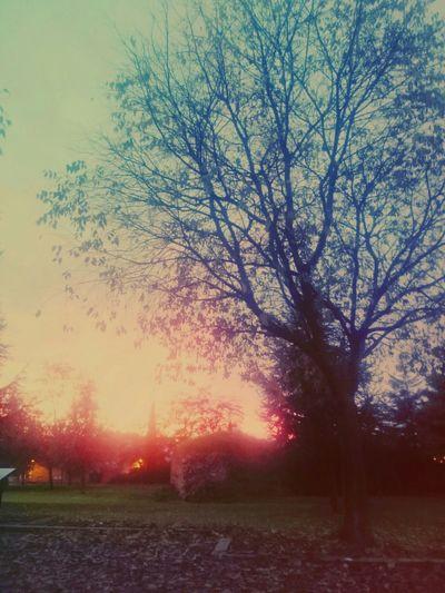 Atardeceres que enamoran Taking Photos Enjoying Life Hello World Colourful Sinfiltros Sun Atardecer Park