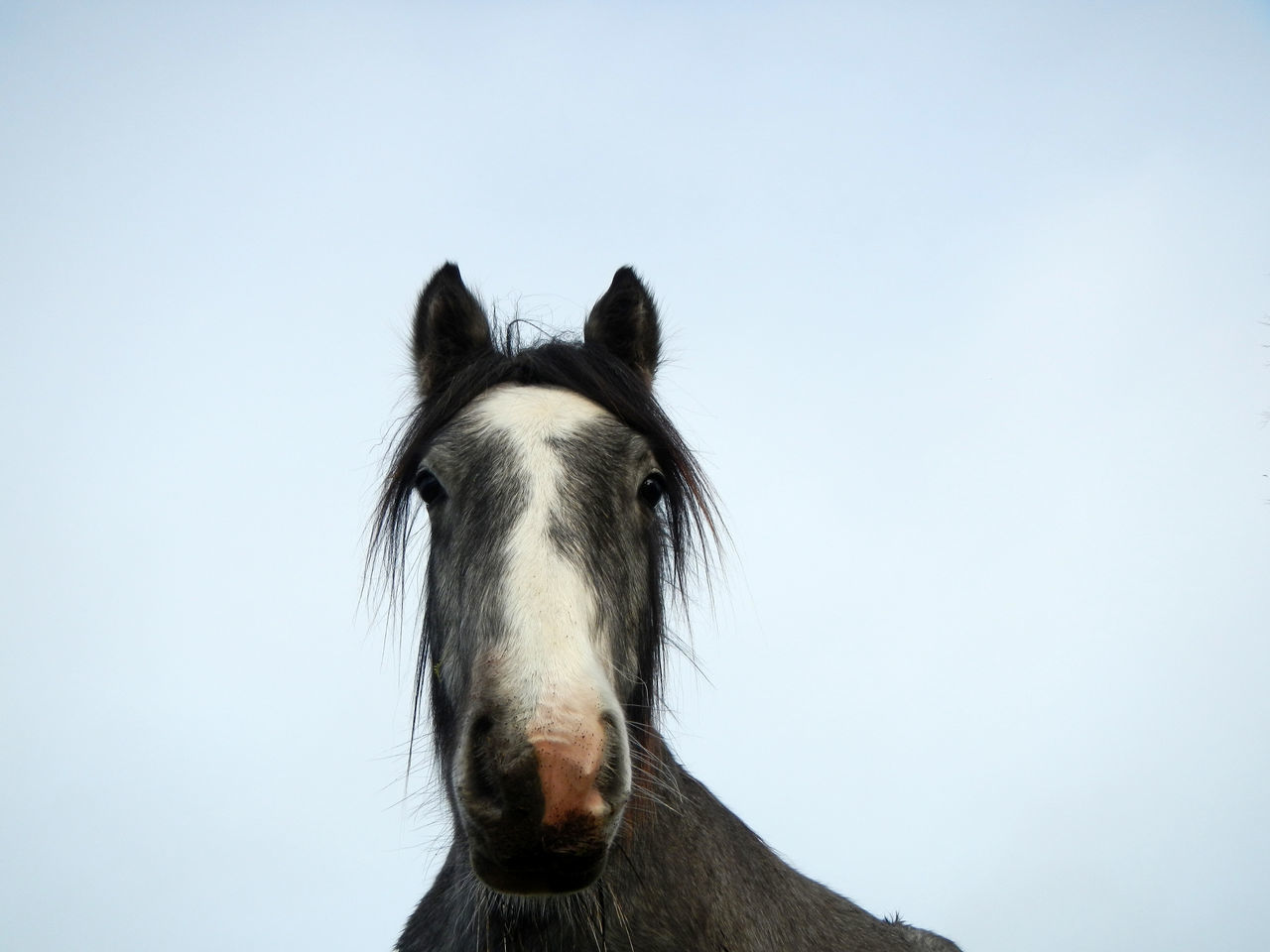 Beautiful stock photos of horse, Animal Head, Animal Themes, Clear Sky, Close-Up
