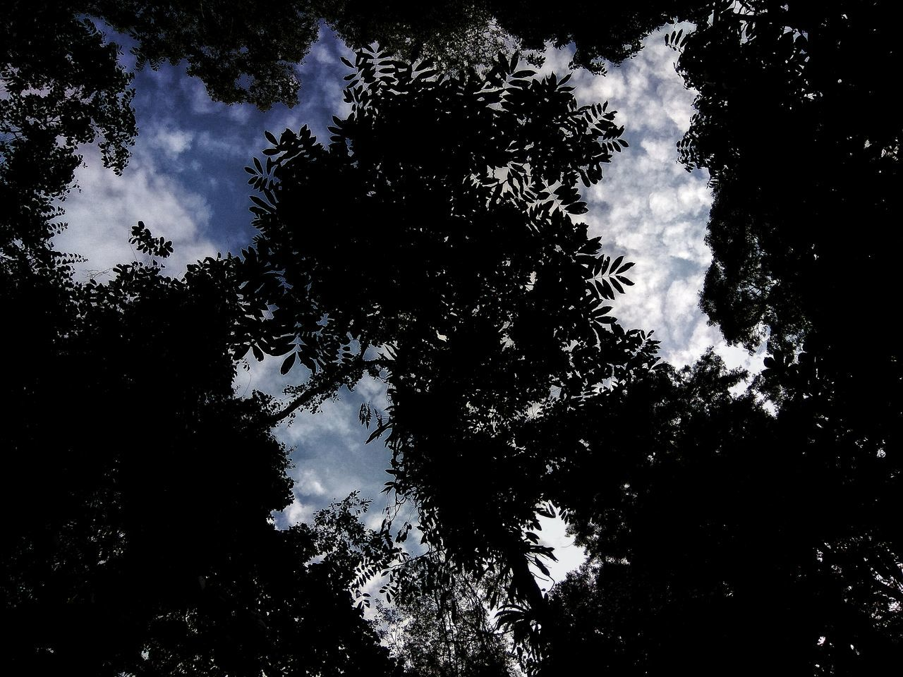 Nature Beauty In Nature No People Silhouette Close-up Outdoors Branch Backgrounds Tree Sky Night Galaxy Dogs Dogs Of EyeEm Dogslife Dogstagram Dogsofinstagram Dogs Life Pet Petal Wild Animals Wild Animals Up Close Wild Animals Close Up Wild Animals Cheetah Beautiful Landscape Wild Animals Love Her